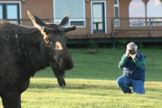 Tom and moose 1